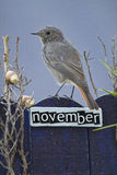 Bird perched on a November decorated fence Royalty Free Stock Photo