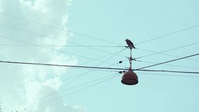 Bird perched on overhead wires with cloudy skies stock video
