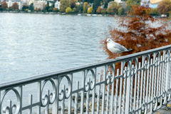 Bird perched on the railing of Lake Geneva, Montreux, Switzerland Royalty Free Stock Photo
