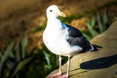 Bird perched on a rock. A beautiful bird perched on a rock, bokeh stock photos