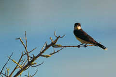Bird perched on tree branch Stock Image