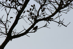 A bird is perched on a tree branch (France) Royalty Free Stock Images