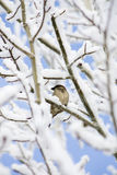 Bird perched on tree branch in snow Stock Photography
