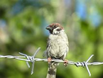 A bird that is perching royalty free stock photos