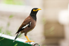 Bird perches on bench in park Stock Images