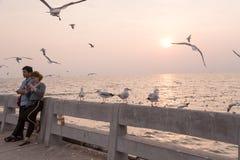 Bird perches on bridge rail at Bang Pu seaside royalty free stock photography
