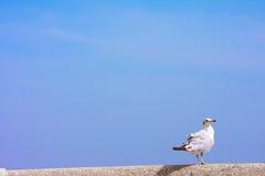 Bird perches on rail bridge. background Royalty Free Stock Images