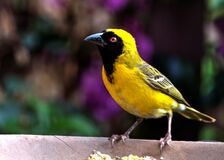 Bird Perching on Outdoors Royalty Free Stock Photography