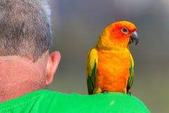 Bird Pet Man Shoulder stock image