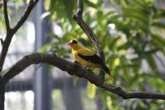 bird_of_a_pheasant_06 photo libre de droits