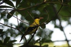 bird_of_a_pheasant_09 photos stock