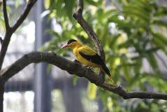 bird_of_a_pheasant_08 image libre de droits