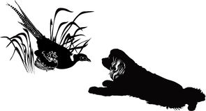 Bird pheasant and dogs. Bird pheasant and the American Cocker Spaniel Stock Images
