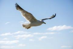 Bird 86 Stock Image