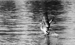 Bird. Photo image with  bird and sea Royalty Free Stock Photography