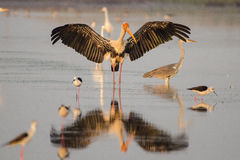 Bird Photo Royalty Free Stock Image