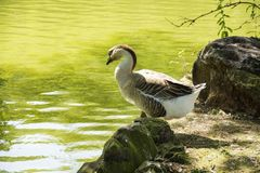 Bird. Photo of a bird with pond, rock and sunlight Stock Photo