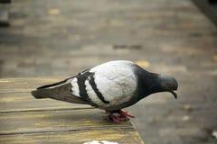 Bird 86 Stock Images