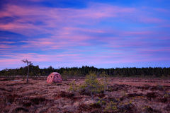 Bird photography hide in the march with forest background, black grouse lek in the Sweden. Pink twilight sunrise morning in the Sw Stock Image