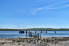 The bird pilings at Stockton Springs, Maine Royalty Free Stock Photography