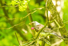 Bird in a pin tree Stock Photo