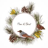 Bird pine branch label. Colored pine branches label with cones frame and sitting bird vector illustration Royalty Free Stock Image