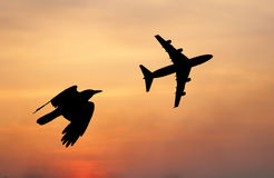 Bird and plane flying black silhouette composition Royalty Free Stock Images