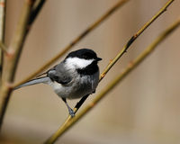 Bird on Plant Branch Royalty Free Stock Images