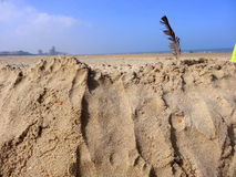 Bird plume on the sand Royalty Free Stock Photos