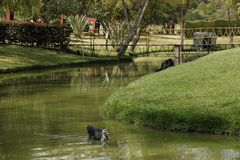 Bird in a pond. Photo taken in one of the most beautiful zoos in Colombia Royalty Free Stock Photography
