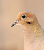 Bird portrait Stock Images