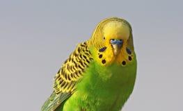 Bird portrait Royalty Free Stock Photos