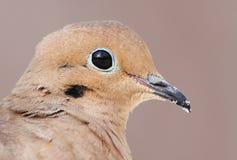 Bird portrait Royalty Free Stock Image