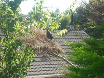 Bird poser Stock Photo