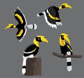 Bird Poses Great Hornbill Vector Illustration Royalty Free Stock Photo