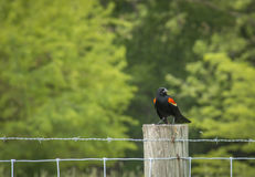 Bird on a post Stock Photo