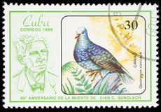 Bird on a postage stamp Stock Image