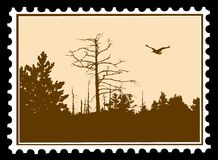 Bird on postage stamps Royalty Free Stock Photo