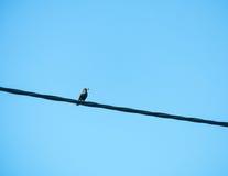 Bird on a power line Stock Photos