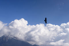 Bird of pray flying above the clouds, Orobie Royalty Free Stock Image