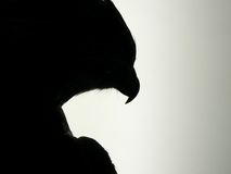 bird prey Στοκ φωτογραφίες με δικαίωμα ελεύθερης χρήσης