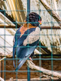 Bird of prey in a cage Royalty Free Stock Images