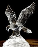 Bird Of Prey, Eagle, Fauna, Bird royalty free stock image