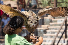 Bird of Prey Show Stock Images