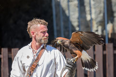 Bird of prey show in medieval castle of Bouillon, Belgium Stock Image