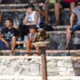 Bird of Prey Show, Oasis Park, Fuerteventura, Canary Island, Stock Image