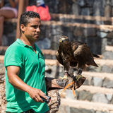 Bird of Prey Show, Oasis Park, Fuerteventura, Canary Island, Stock Photos