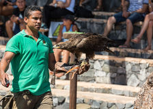 Bird of Prey Show, Oasis Park, Fuerteventura, Canary Island, Royalty Free Stock Photography
