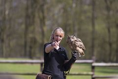 Bird of prey show stock photo