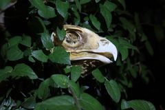 Bird of Prey Skull Stock Photos